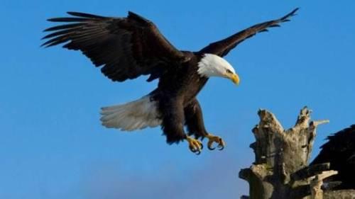 день орла