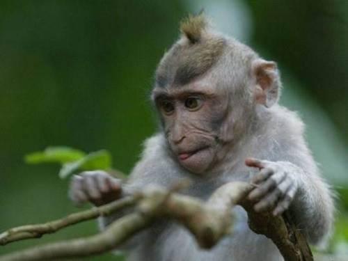 названия обезьян