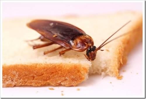 Вывести тараканов самостоятельно не удаётся