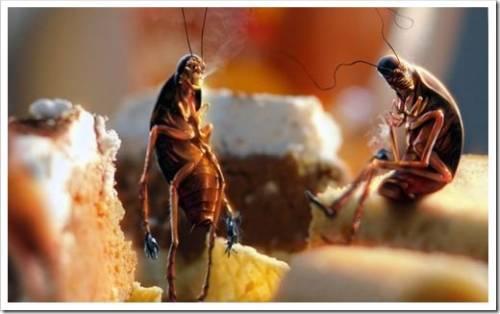 Влияет ли ведение хозяйства на появление тараканов