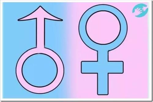 Различные периоды жизни сперматозоидов