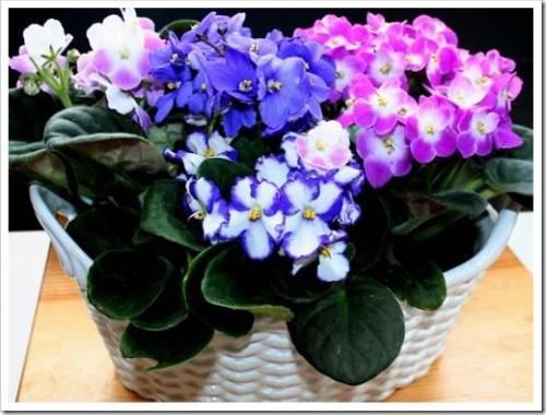 Полив с удобрением и формирование цветка