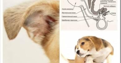 Наиболее распространенные болезни собак и кошек