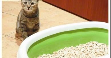 Каким бывает наполнитель для кошачьего туалета?