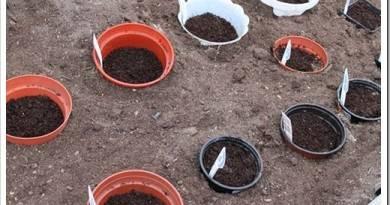 Как посеять семена цветов под зиму