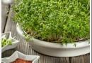 Какая микрозелень самая вкусная?