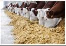 Отчего зависит вкус молока: правда о кормах и пищевых добавках