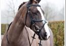 Виды амуниции из железа для лошадей и как его выбирать