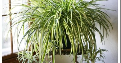 Какие комнатные растения неприхотливые в уходе?